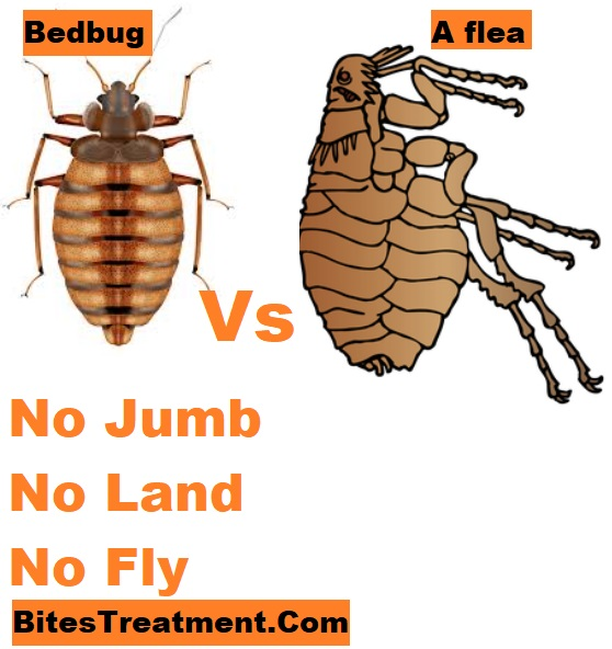 bedbug flight s fleas jumping