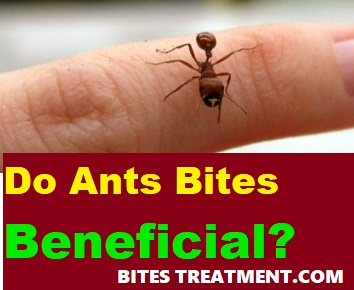 do ant bites beneficial of any kind
